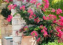 Knossos 2, fra hagen
