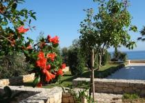 Knossos 3, fra hagen 1