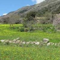 Wild flowers of Crete 2